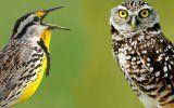 Дієта для сов і жайворонків