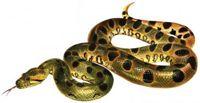 Два народних засоби від укусу змій