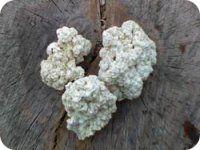 Кам'яне масло вилікує виразку шлунка