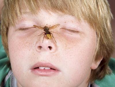 Перша допомога при укусах комах