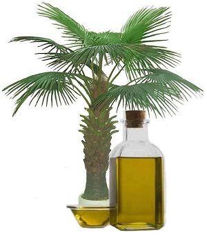 Що більше користі чи шкоди в пальмовій олії?