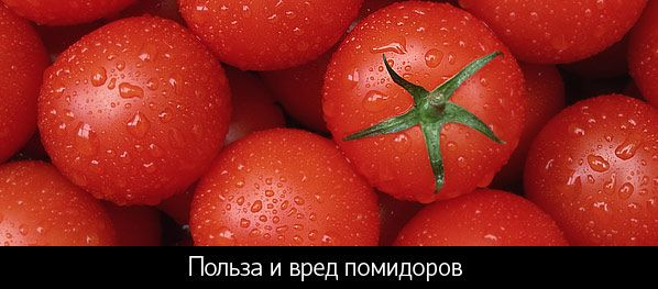 Користь і шкода помідорів