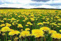 Рецепт від алергії