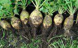 Сік брукви і його корисні властивості